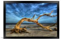 Wind Bent Driftwood, Framed Print