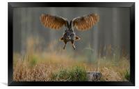 Western Siberian Eagle Owl, Framed Print