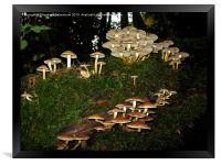 Fairy Ring of Mushrooms, Framed Print