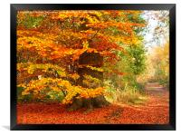 Beech Woodland in Autumn, Framed Print
