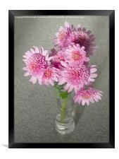 Chrysanthemum Beauty, Framed Print