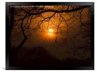 Sun suspended in the trees, Framed Print