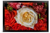 White Rose, Framed Print
