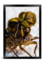 Hornet - up close and personal., Framed Print