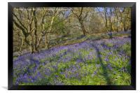 Bluebell hillside, Framed Print
