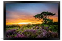 New Forest Sunset at Bratley View, Framed Print