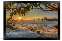 Sunrise through the Branches, Framed Print