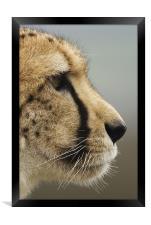 Cheetah profile, Framed Print