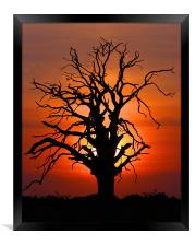 Sunset Tree, Framed Print