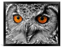 Eyes of a Bird of Prey, Framed Print