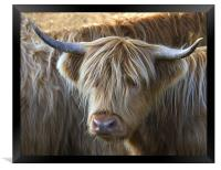 Face to Face With a Horny Cow, Framed Print