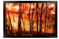 Sunset at botanical garden, Framed Print
