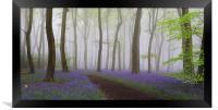 Bluebells Heaven, Framed Print