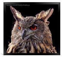 EURASIAN EAGLE OWL , Framed Print