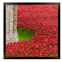 Poppies at the Tower of London, Framed Print