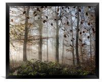 Misty Autumn, Framed Print