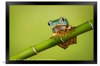 Super Tiger Leg Monkey Tree Frog, Framed Print