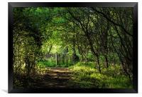Enchanted Forest, Framed Print