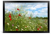 colourful wildflower meadow, Framed Print