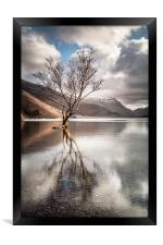 The Lonely Tree, Framed Print
