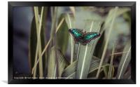 Little Blue, Framed Print
