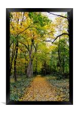 Path of Gold, Framed Print