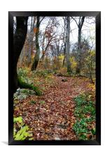 Autumn Woodland, Framed Print
