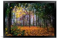 Colours of Autumn, Framed Print