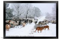 Moorland Sheep on a Frosty Winter Day, Framed Print
