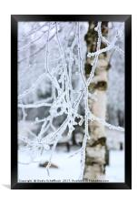 Hoar Frosted Birch, Framed Print