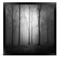 Woodland In The Fog, Framed Print