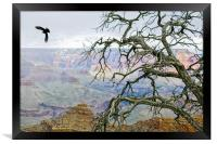 Raven in Grand Canyon, Framed Print