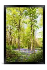 Bluebell Woods in Spring, Framed Print