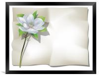 Magnolia on Sheet, Framed Print