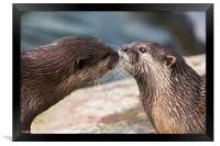 Asian small-clawed otter pair, Framed Print