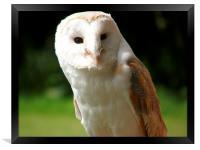 Barn Owle, Framed Print