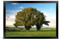 Two Trunk Tree, Framed Print