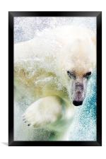 Polar Bear, Framed Print