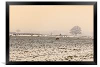Sheep in the winters  evening mist, Framed Print