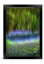 Ethereal Bluebells, Framed Print