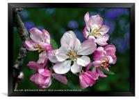 """Blossoms , Bluebells and bug"", Framed Print"