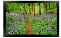 """Evening light in the bluebell wood 3"", Framed Print"