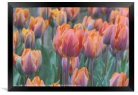 """""""Artistic Tulips"""", Framed Print"""