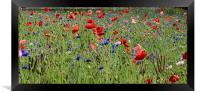 Flowers within the meadow, Framed Print
