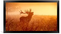 Deer in Golden Light , Framed Print