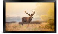 Red deer stag, Framed Print