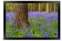Forest Of Dean Bluebells, Framed Print