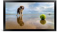 Dog v Ball, Framed Print