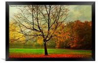 The Autumn Tree Hampstead  London , Framed Print