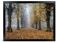 clumber park, Framed Print
